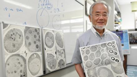 El biólogo japonés Yoshinori Ohsumi gana el Premio Nobel de Medicina